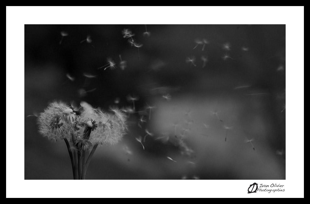 France - lac du Passy (2012) Ivan Olivier Photographie©
