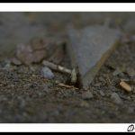 espagne-coll-de-nargo-ivan-olivier-photographie-11