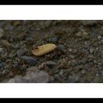 espagne-coll-de-nargo-ivan-olivier-photographie-9