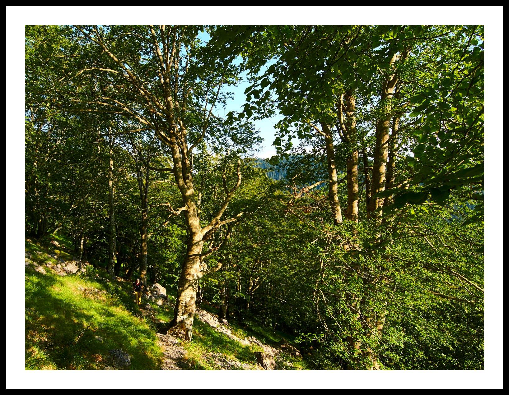 gc-falaise-pene-haute-2016-ivan-olivier-photographies