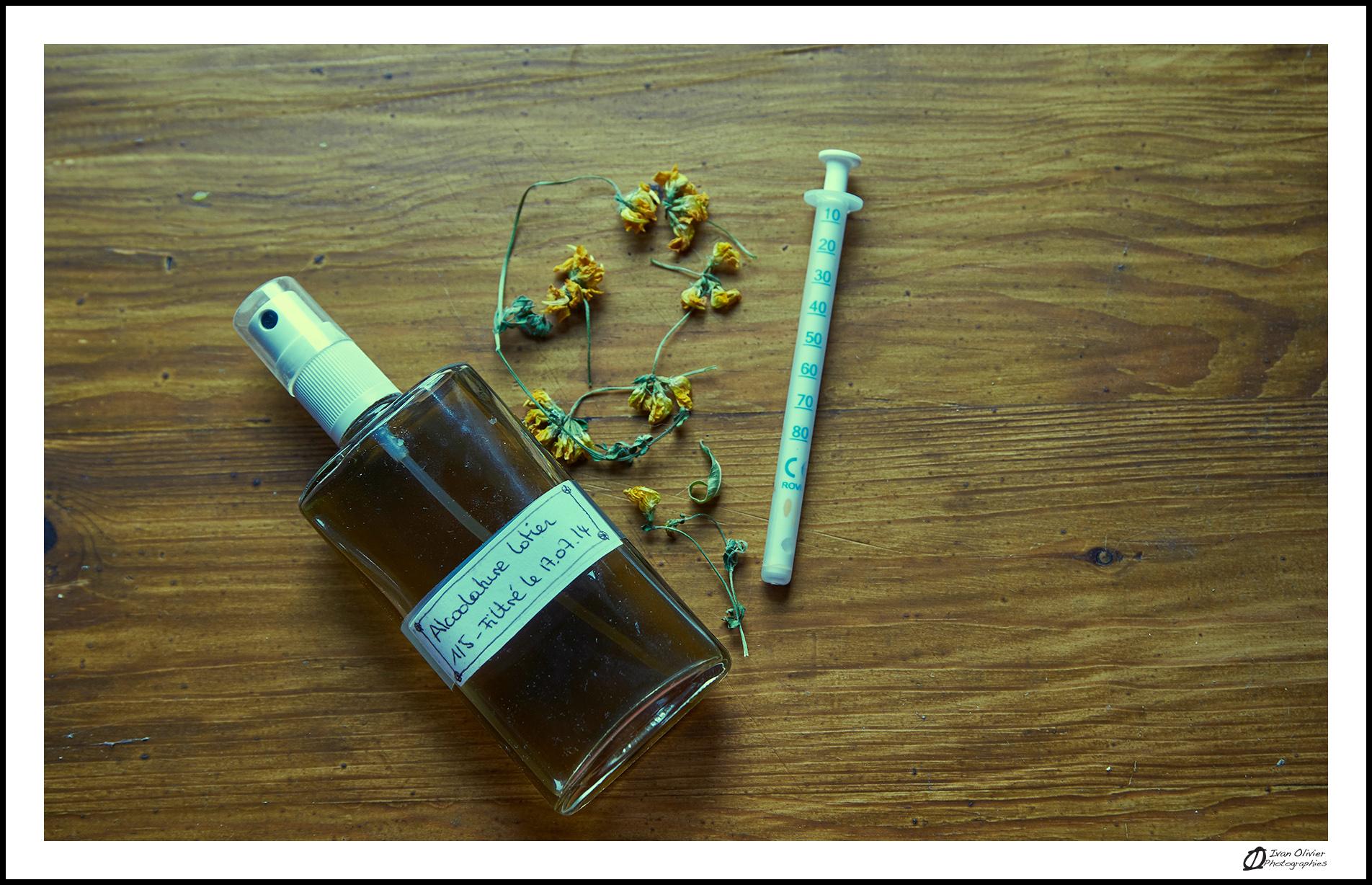 GC - escalade medicinale - cueillette - lotier corniculé lotus corniculatus - ivan olivier photographies (1)