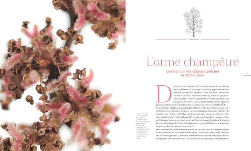 GC-chronique livre les arbres amoureux - la salamandre 1