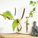 Chronique livre: Les arbres amoureux – Ed. La Salamandre