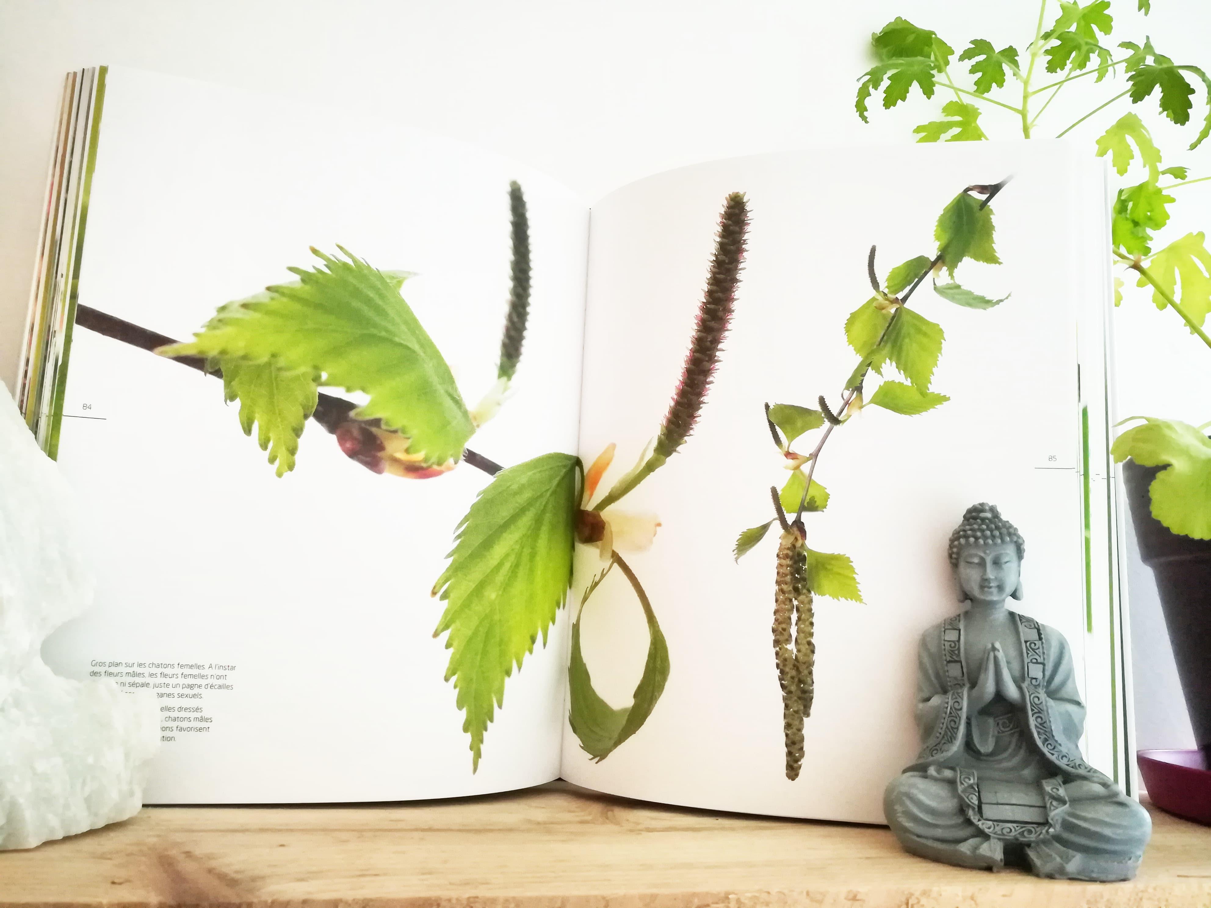 GC - les arbres amoureux - extraits - la salamandre 1