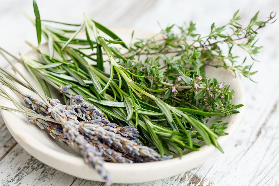 GC - herbes de provence - thym - pixabay