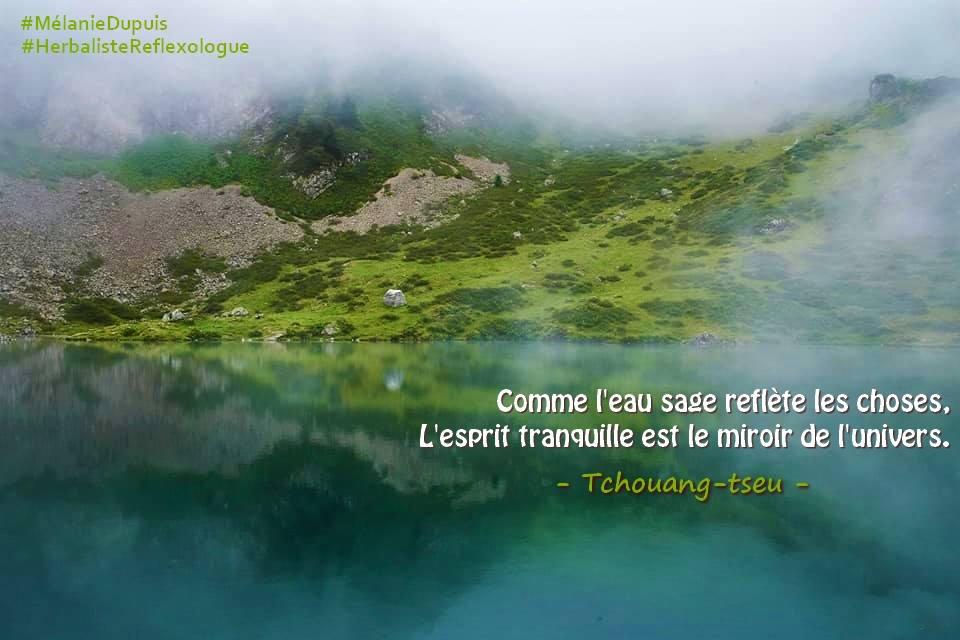 GC - citation - l'eau sage reflète l'univers - Mélanie dupuis - herbamiste reflexologue ariège