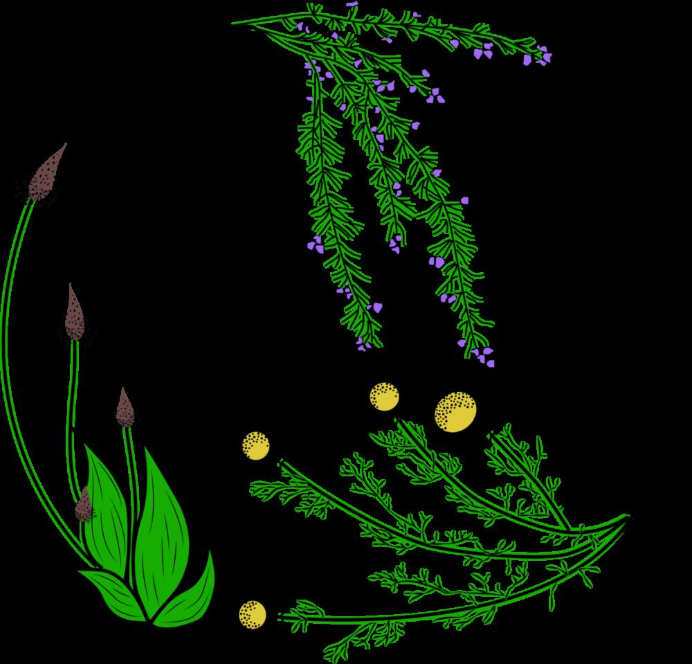 GC - logo melanie dupuis reflexologue plantaire vectorisé