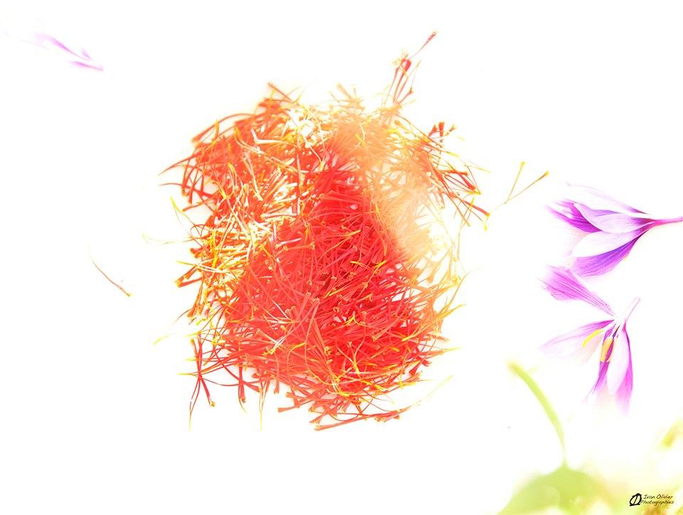 GC - fleurs et pistils de safran - mémé crocus