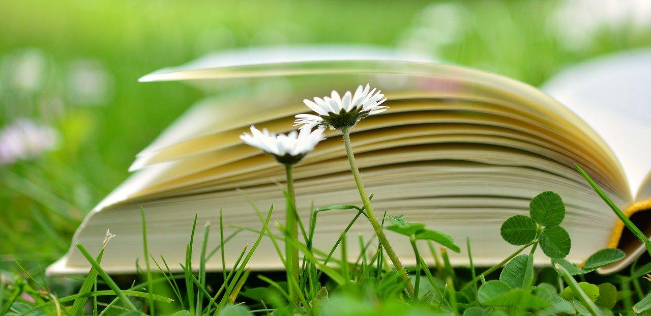 GC - chronique livres - ecologie au quotidien - pixabay