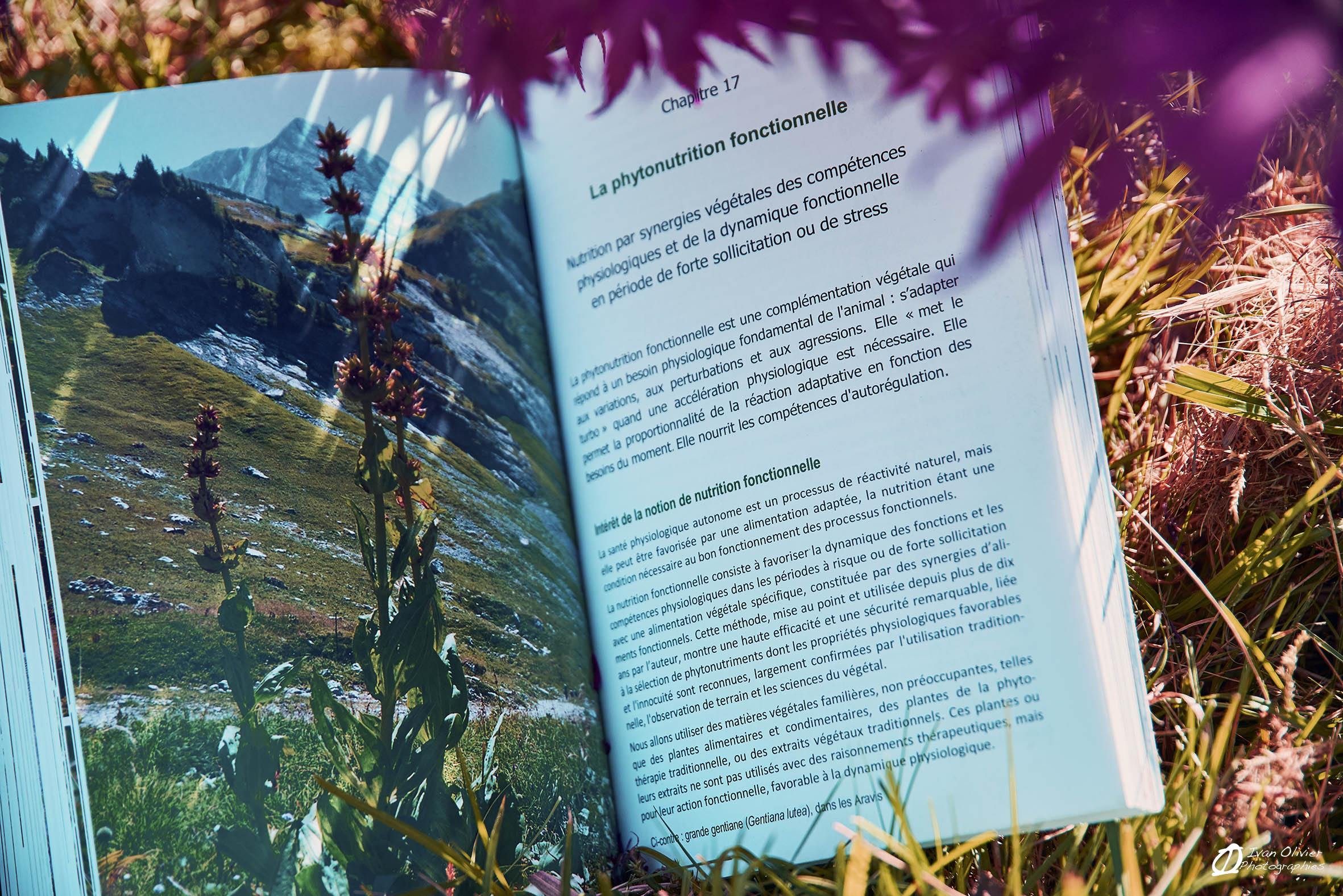 livre GC les pieds sur terre - Ivan Olivier Photographies© France (12)