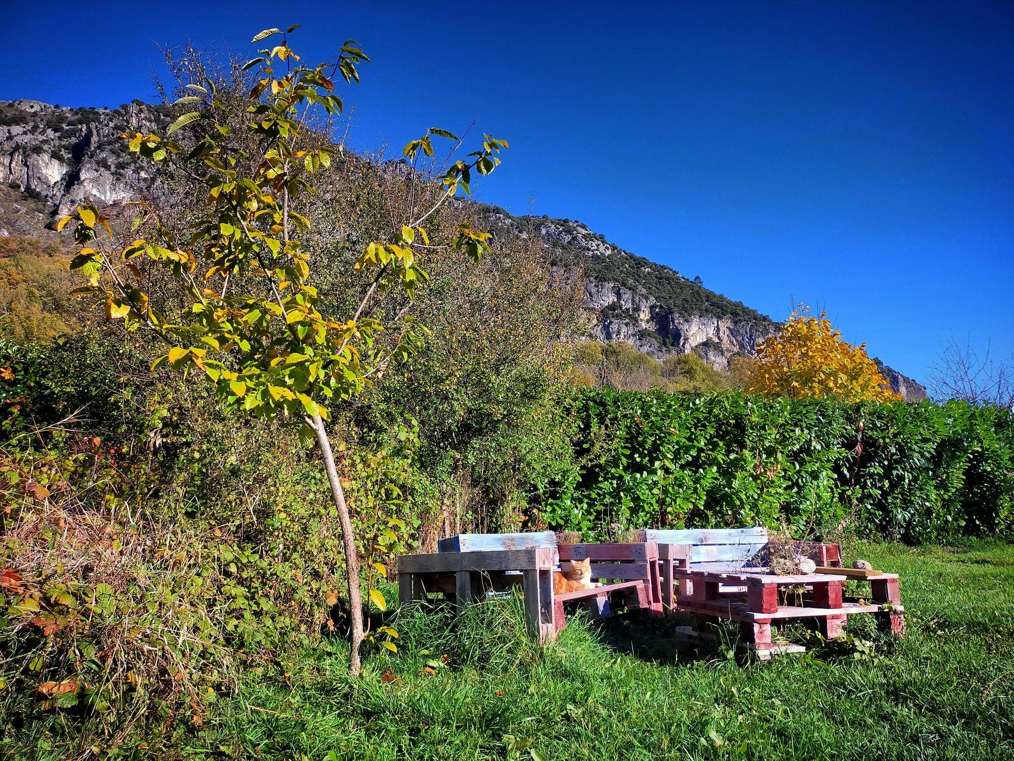 GC- Chataignier - castanea sativa - florac surba - automne 2020