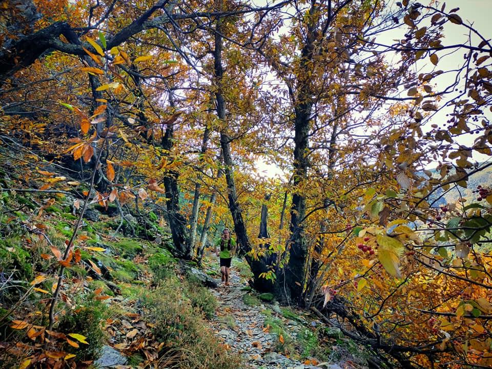 GC - Chataignier - sous bois trail - ardeche thines automne 2020
