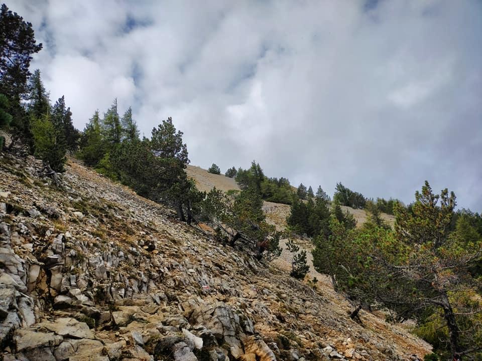 21/09/20 - Dans le pierrier avant d'arriver à l'observatoire météorologique du Mont Ventoux...