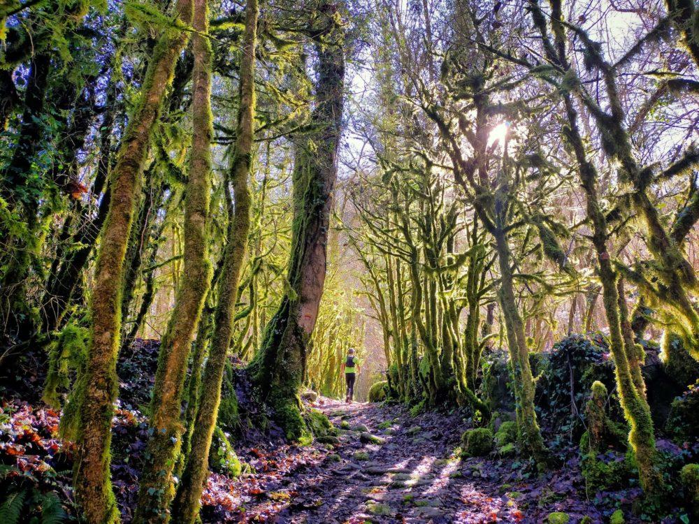 14/02/21 - Le bois des elfes après le ruisseau de la Courbière