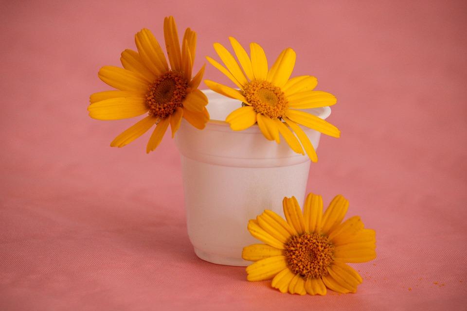 GC - trio de fleurs jaunes pixabay