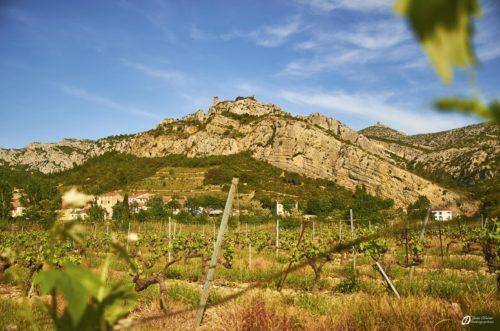 Vue du château depuis les vignes à coté du camping - mai 2021