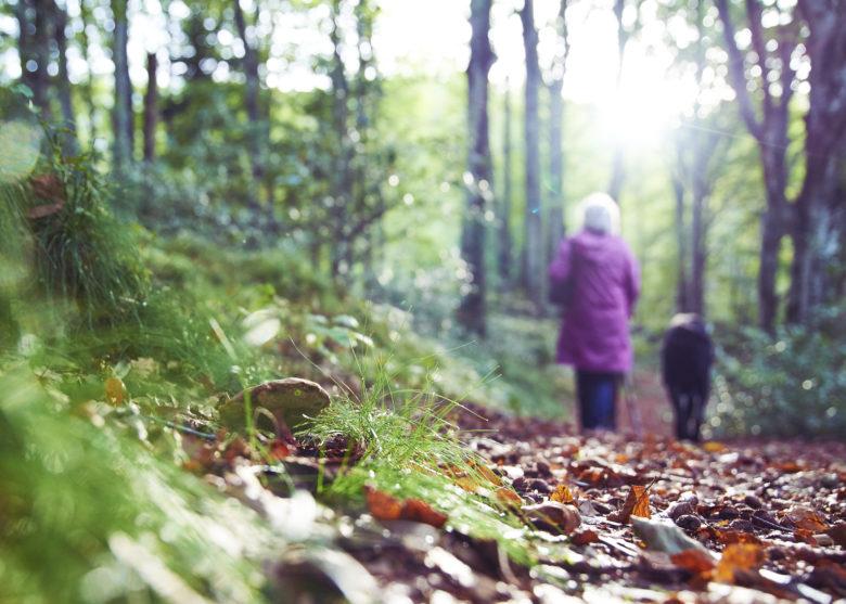 balade en forêt© Ivan Olivier Photographie (6)
